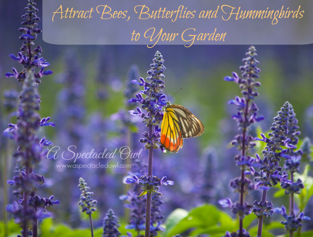 Attract Bees Butterflies And Hummingbirds To Your Garden A Spectacled Owl
